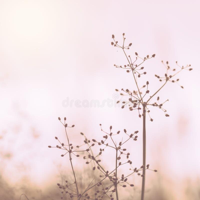 Wildflowerherbstsaison-Naturlandschaft mit Sonnenuntergang stockfoto