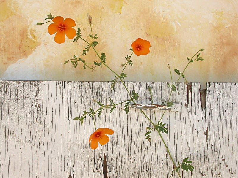 Wildflowers ζωής ακόμα Στοκ εικόνες με δικαίωμα ελεύθερης χρήσης