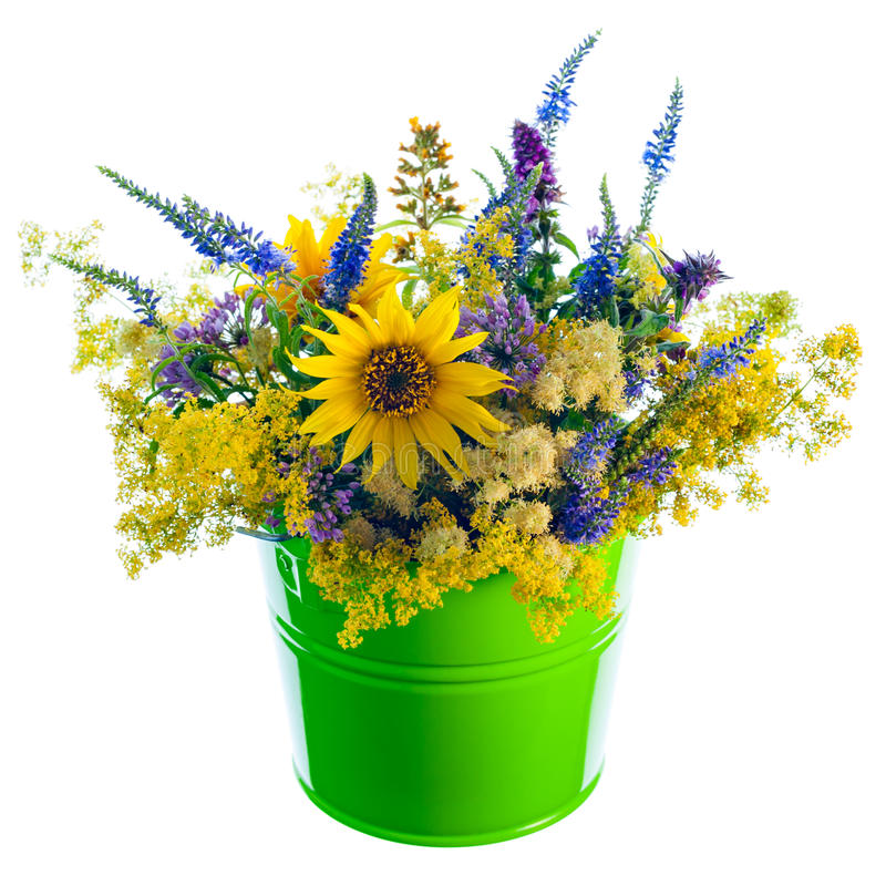 wildflowers κάδων στοκ φωτογραφία με δικαίωμα ελεύθερης χρήσης