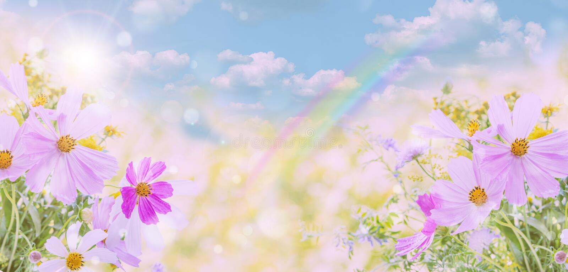 Wildflowers σε ένα φυσικό υπόβαθρο στοκ φωτογραφία με δικαίωμα ελεύθερης χρήσης