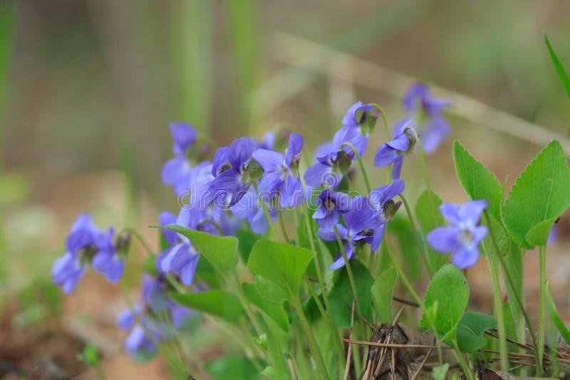 Wildflowers στο δάσος στοκ εικόνα