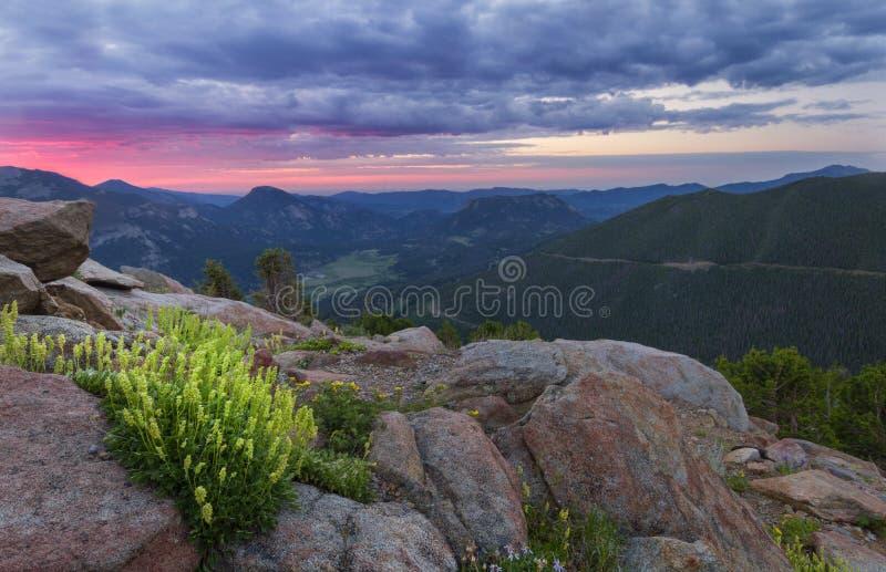 Wildflowers στο δρόμο κορυφογραμμών ιχνών στο δύσκολο εθνικό πάρκο βουνών στοκ φωτογραφία με δικαίωμα ελεύθερης χρήσης