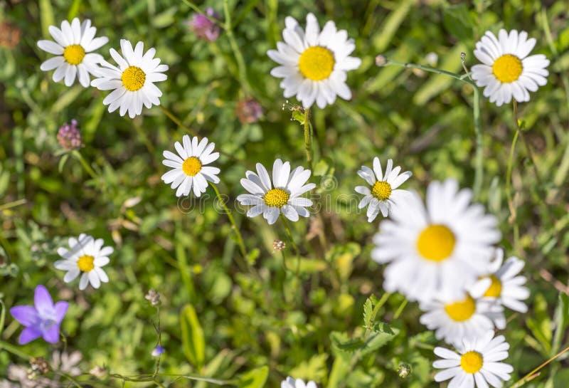 Wildflowers στο χρόνο άνοιξη στοκ εικόνα