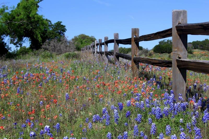 Wildflowers του Τέξας και ξύλινος φράκτης την άνοιξη στοκ φωτογραφίες