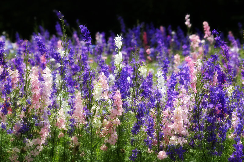 wildflowers του Τέξας στοκ φωτογραφίες με δικαίωμα ελεύθερης χρήσης