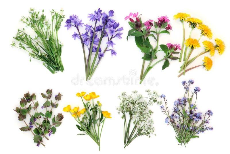 wildflowers весны света одуванчика bokeh стоковое изображение rf