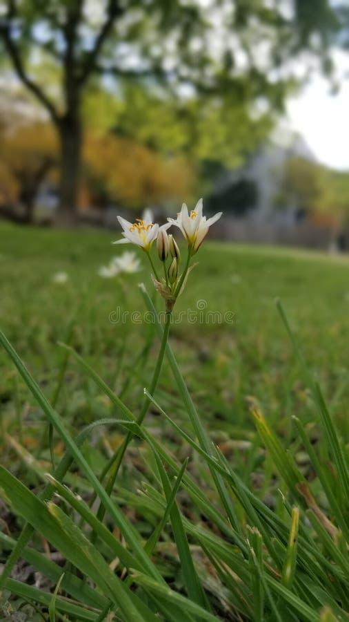Wildflowers весны Техаса стоковая фотография rf