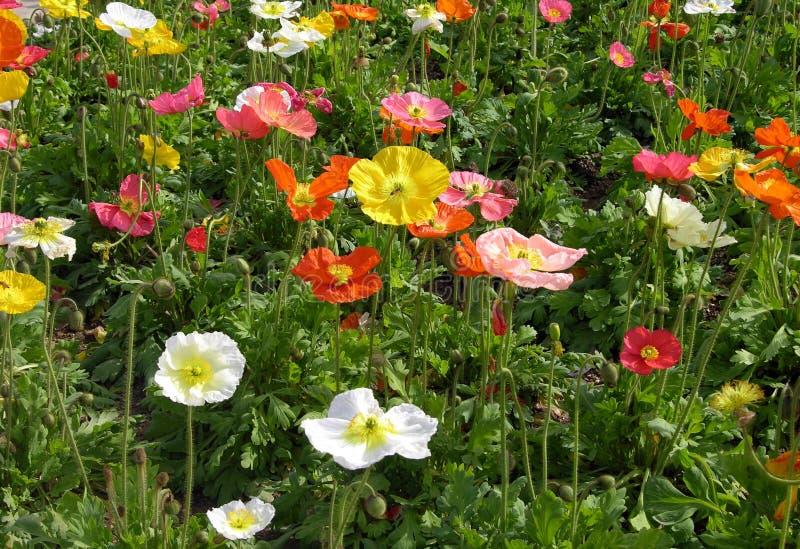 Wildflowers весны Стоковые Фото