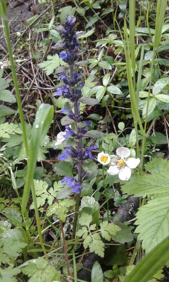 Wildflowers выросли страной, который стоковое фото