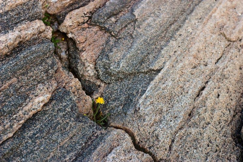 Wildflowers в crevice стоковое фото rf