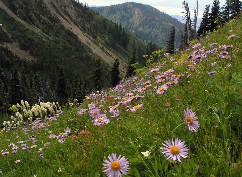 wildflowers горных склонов стоковая фотография