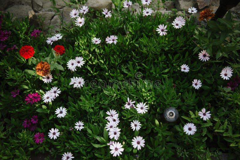 Wildflowers других цветов на лужайке стоковая фотография rf
