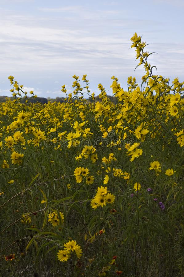 Wildflowers злаковика на охраняемой природной территории соотечественника Montezuma стоковые изображения