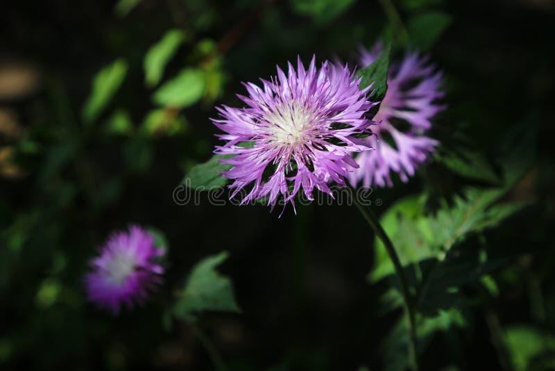 Wildflowers на луге в солнечном дне стоковые изображения rf