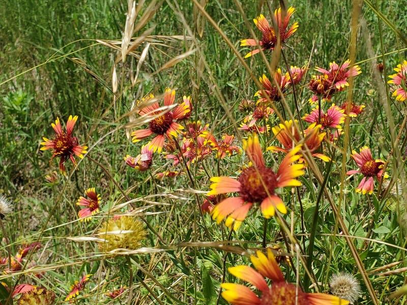 Wildflowers 1 обочины стоковое изображение rf