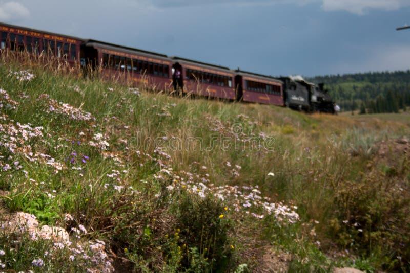 Wildflowers растя вдоль железной дороги Cumbres Toltec сценарной стоковое фото