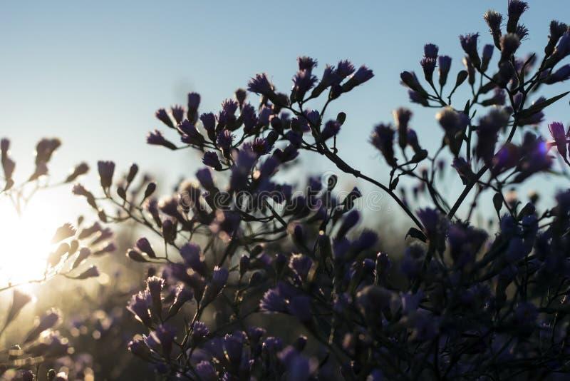 wildflowers photo stock