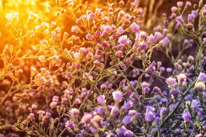 wildflowers photo libre de droits