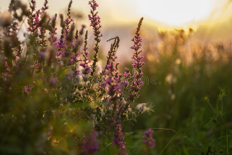 wildflowers images stock