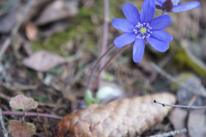 wildflowers fotos de archivo