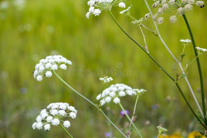wildflowers imagen de archivo libre de regalías