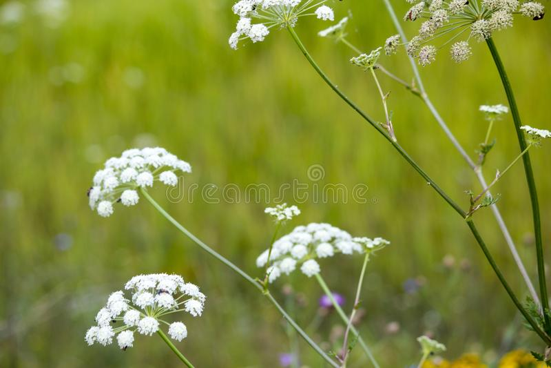 wildflowers imagem de stock royalty free