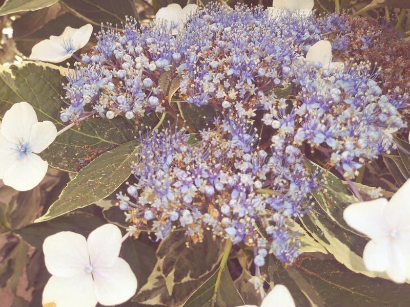 wildflowers immagini stock
