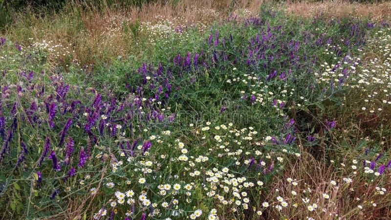 wildflowers fotografia stock