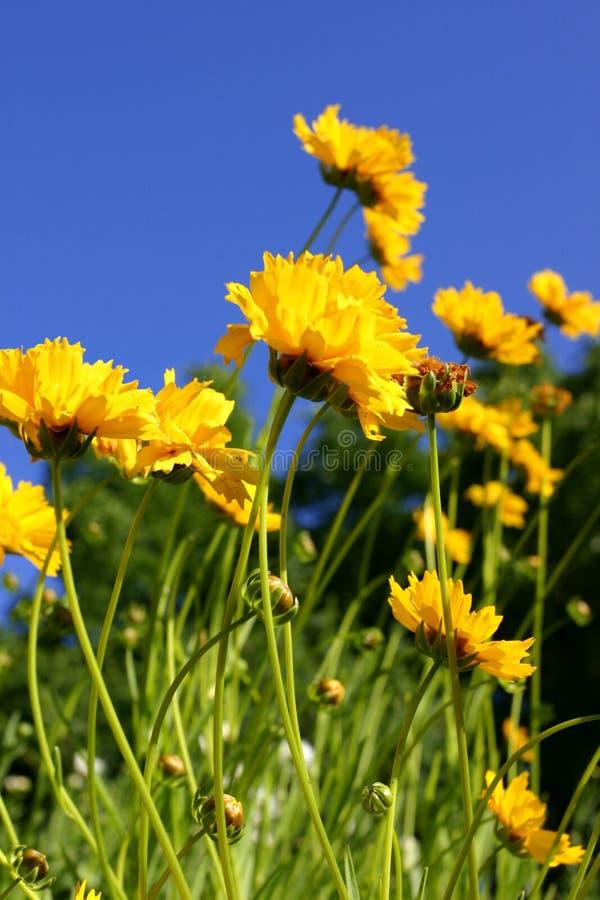 Download Wildflowers zdjęcie stock. Obraz złożonej z natura, roślina - 140654