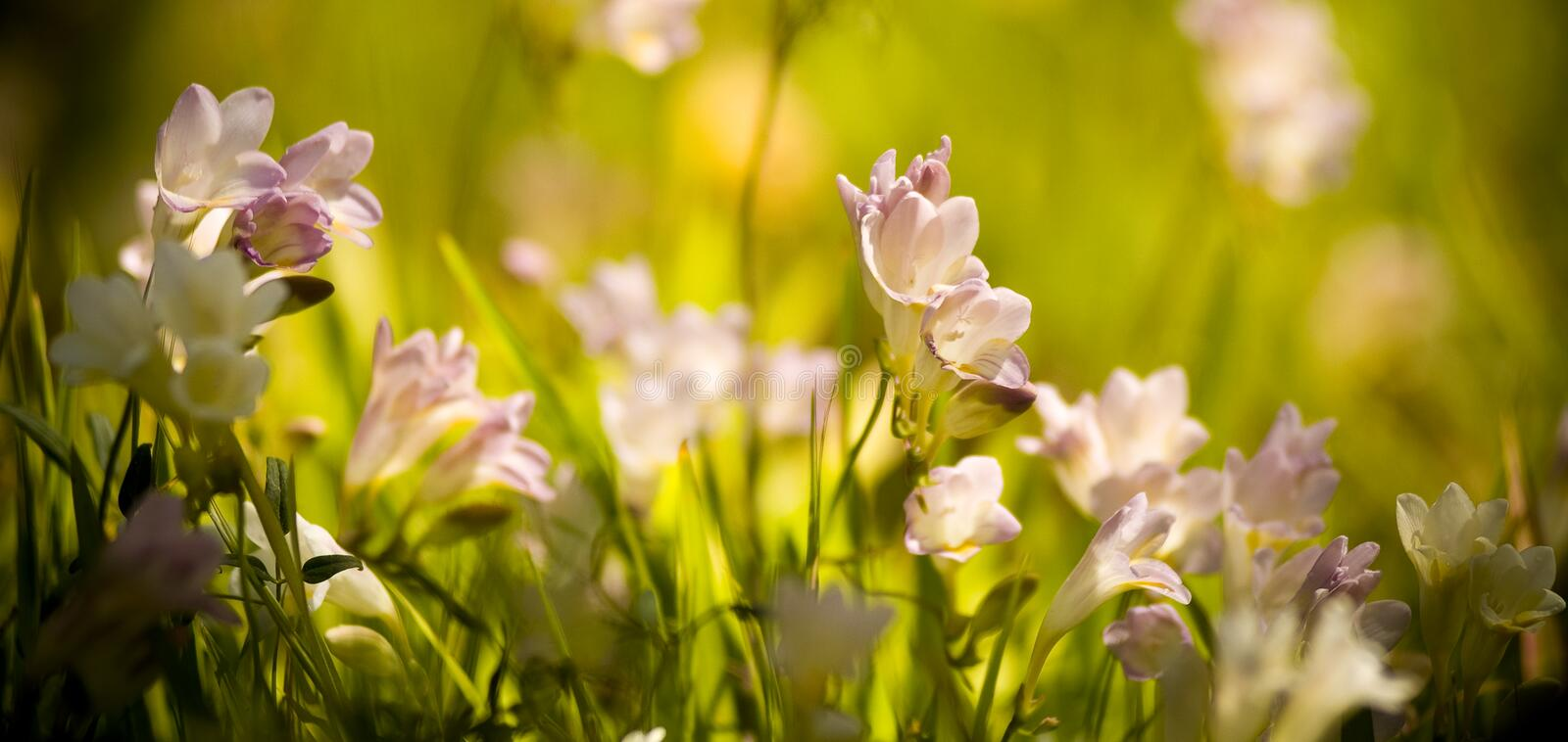 Wildflowers. Glow in the sun during spring stock photography
