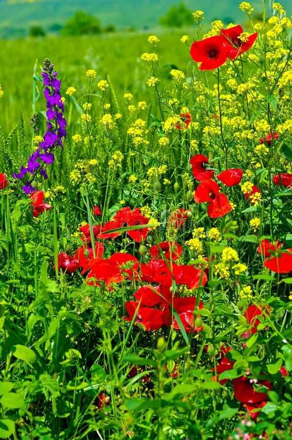Wildflowers. stock foto's