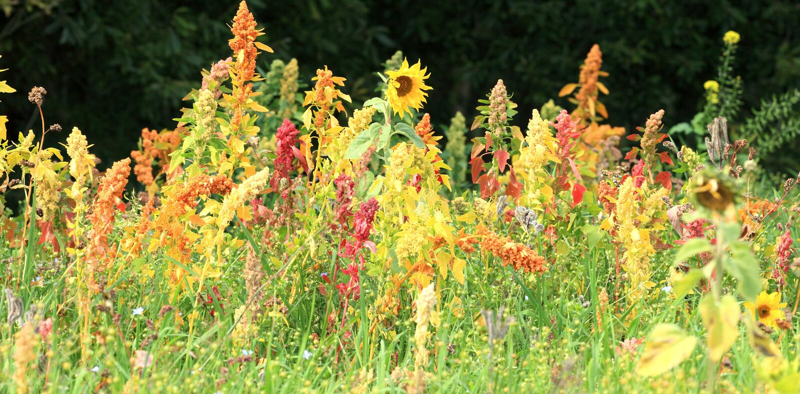 Wildflowers. foto de archivo libre de regalías