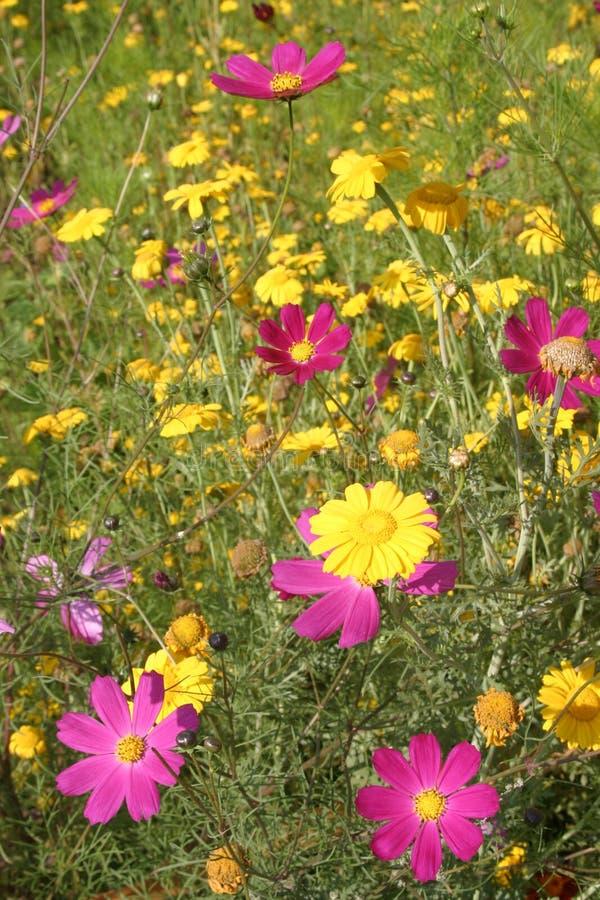 Wildflowers 2, Qinghai, China imágenes de archivo libres de regalías