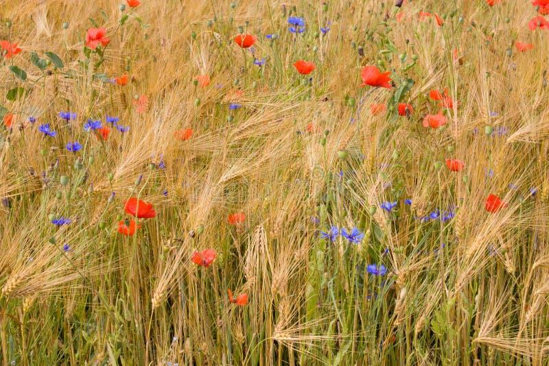 Wildflowers. imagenes de archivo