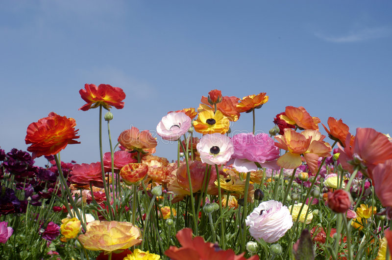 wildflowers στοκ φωτογραφίες με δικαίωμα ελεύθερης χρήσης