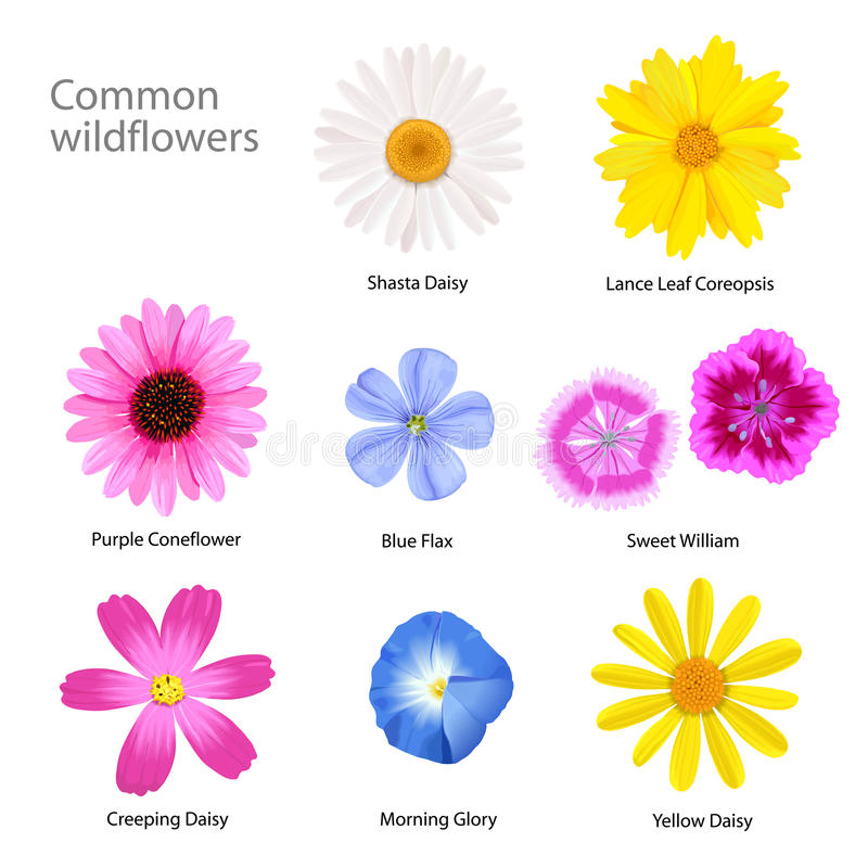 Wildflowers απεικόνιση αποθεμάτων