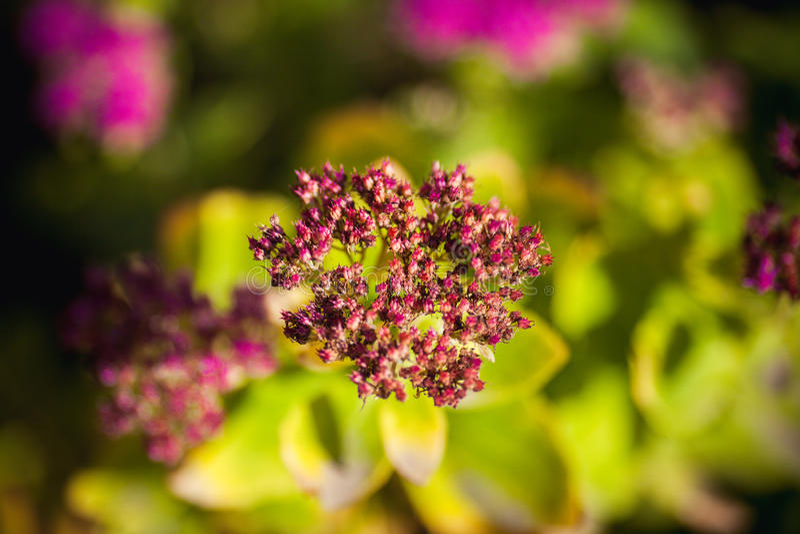 Wildflowers fotografie stock