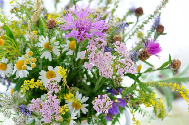 wildflowers fotografia de stock royalty free