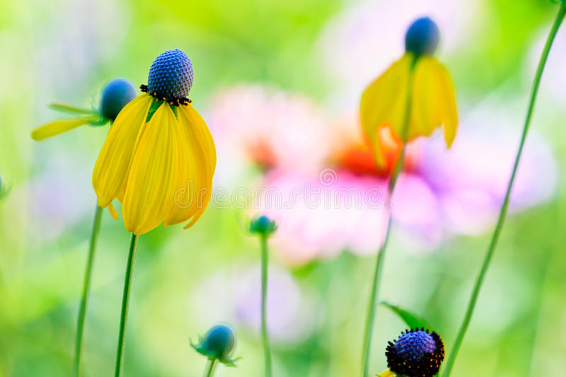 wildflowers photo stock