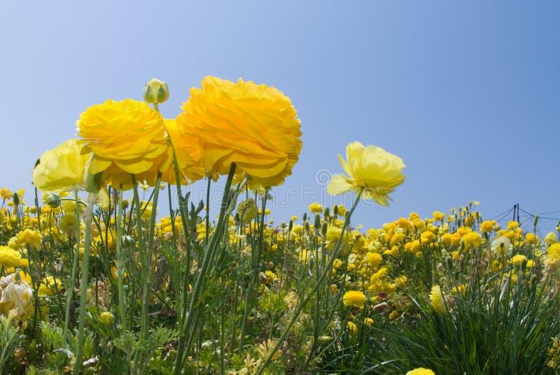 wildflowers στοκ φωτογραφία με δικαίωμα ελεύθερης χρήσης