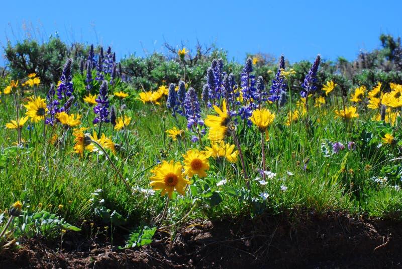 wildflowers στοκ εικόνα με δικαίωμα ελεύθερης χρήσης
