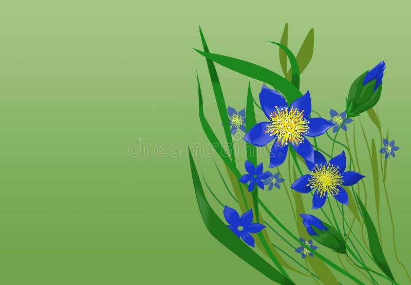 Wildflowers ilustração do vetor