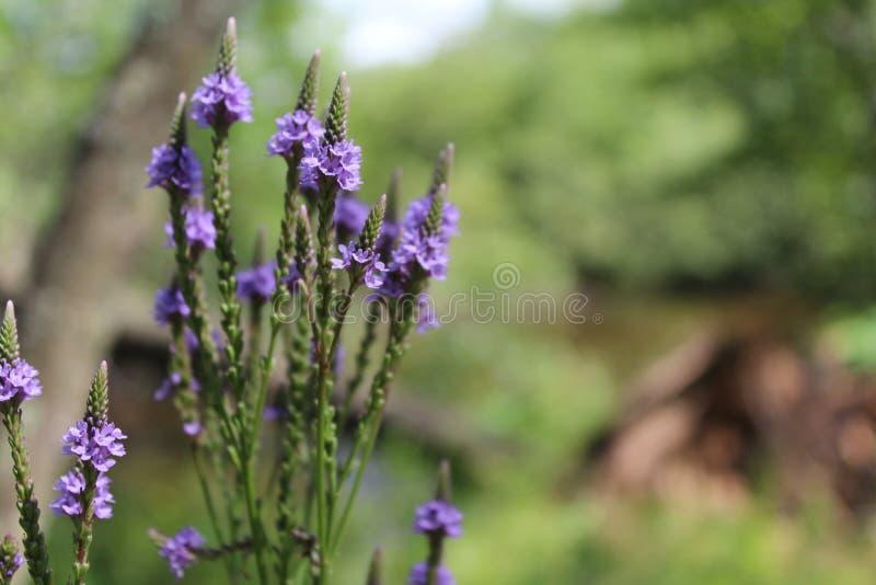 wildflowers photographie stock libre de droits