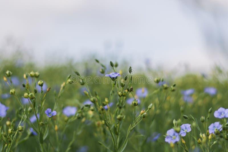 wildflowers royalty-vrije stock foto