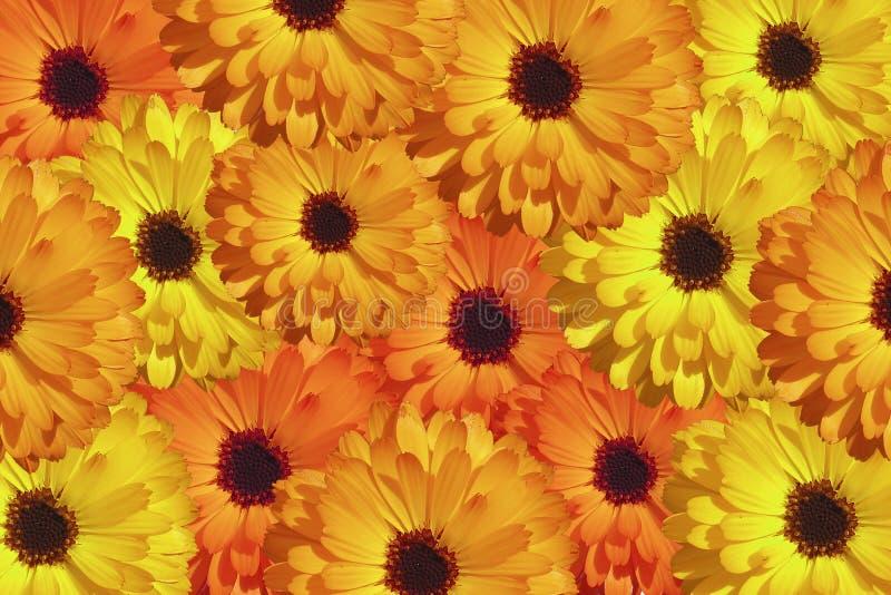 Download Wildflowers stock photo. Image of wildflowers, wallpaper - 86990