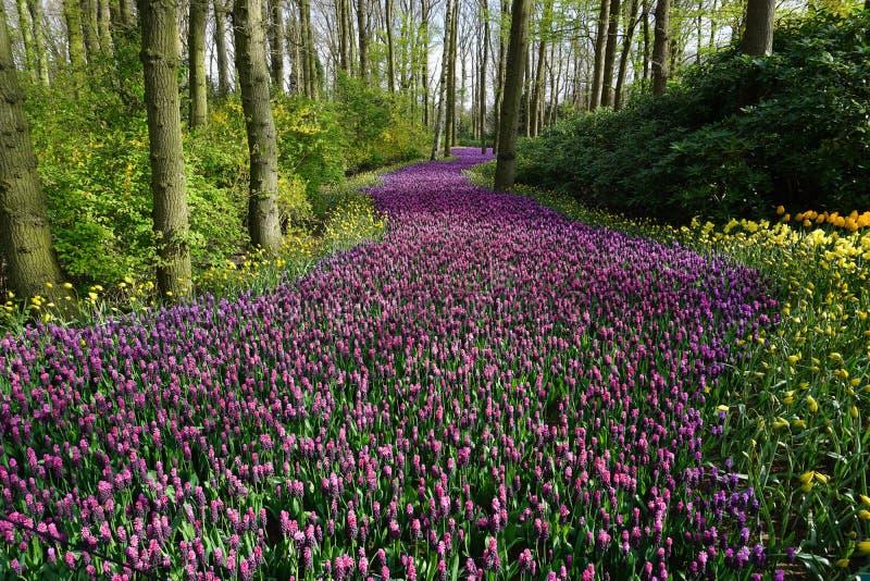 Wildflowers зацветая в лесе