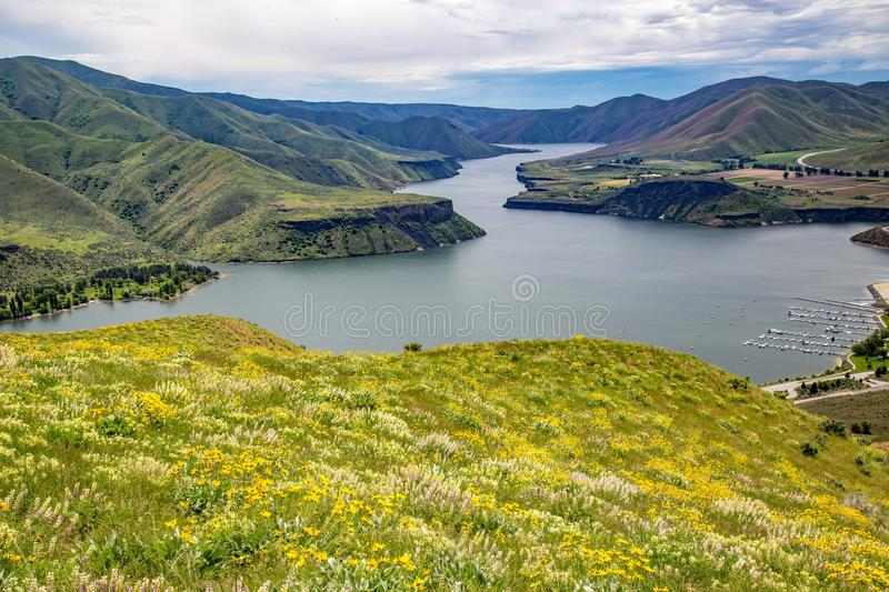 Wildflowers above Lucky Peak Reservoir in Southeast Boise, Idaho. Hiking in the foothills near Lucky Peak stock images