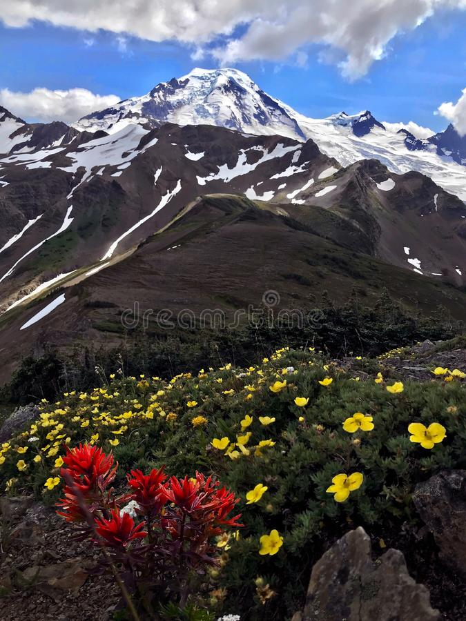 Wildflowers in alpiene weiden dichtbij vulkaan zet Baker dichtbij Bellingham op stock foto