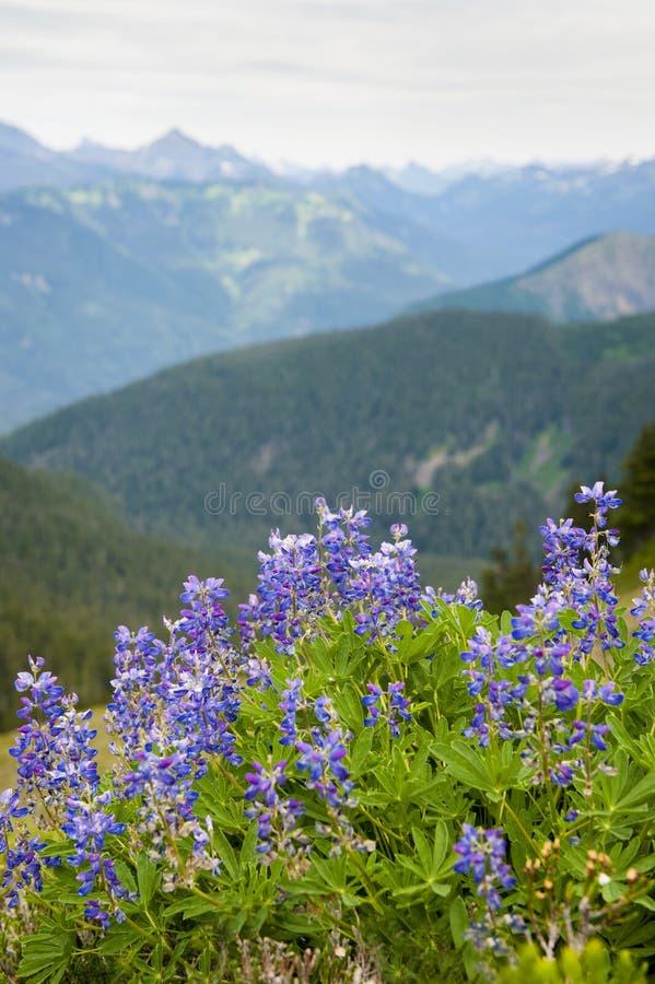 Wildflowers alpinos. imágenes de archivo libres de regalías