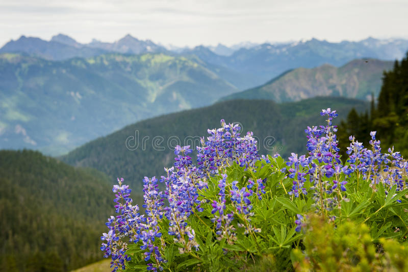 Wildflowers alpinos. imagen de archivo